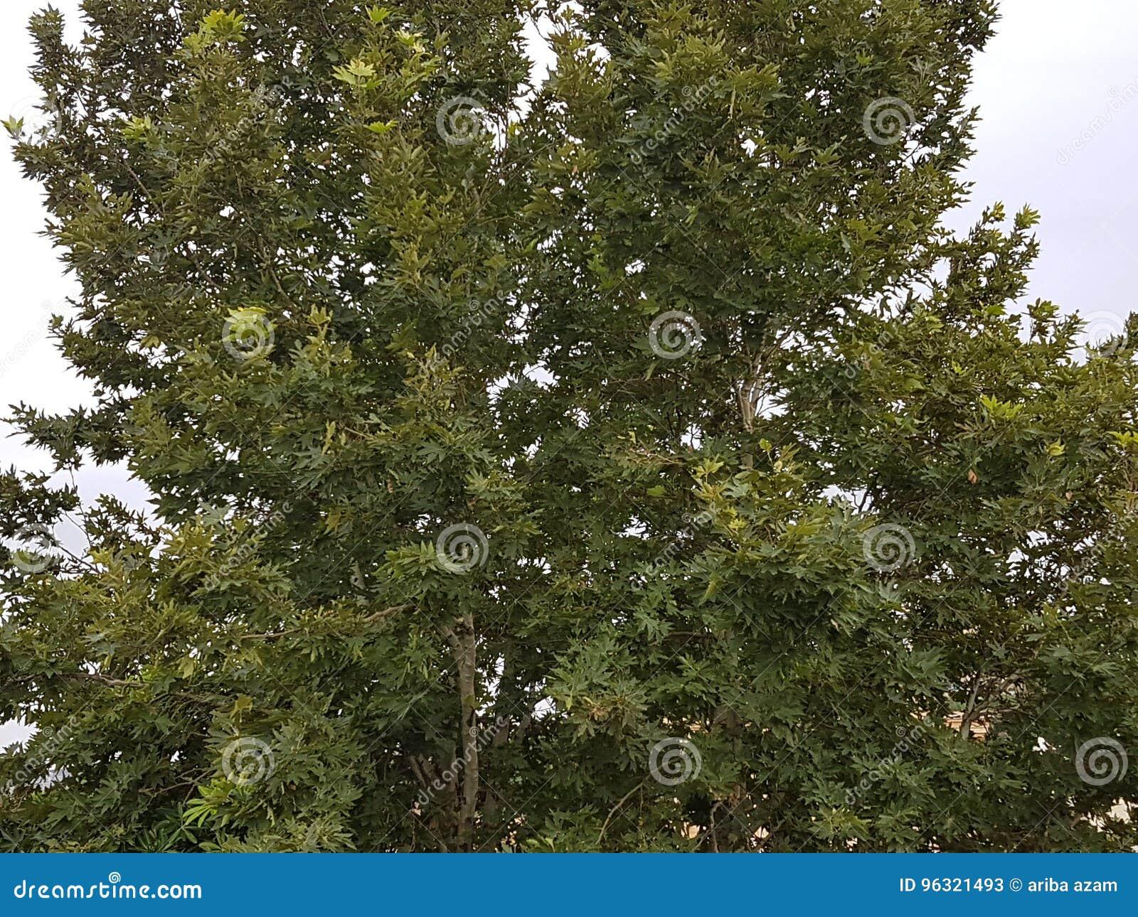 Bello albero