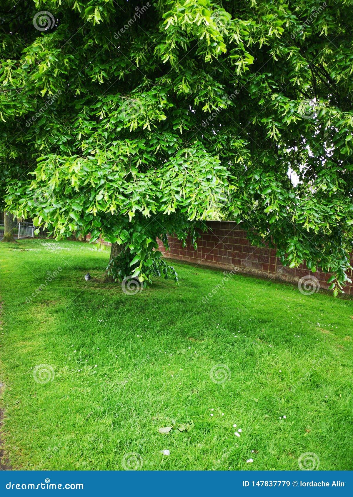 Bello albero verde - immagine della molla