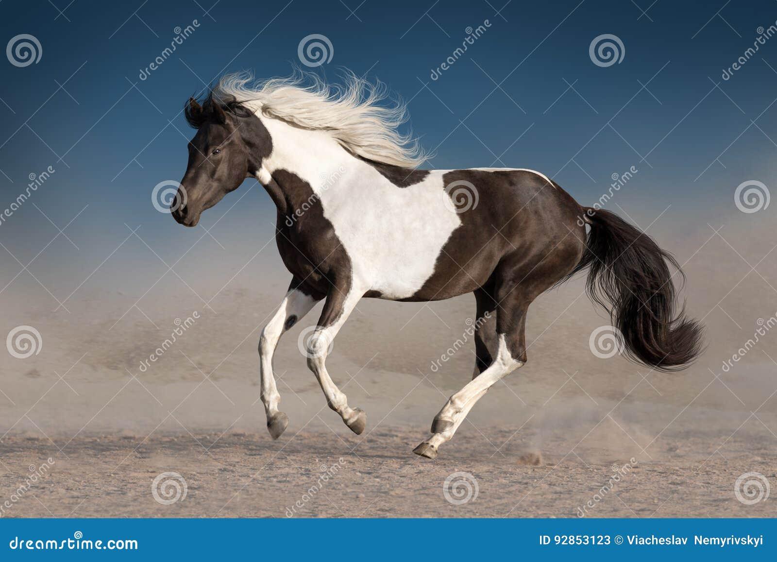 Bello cavallo pezzato