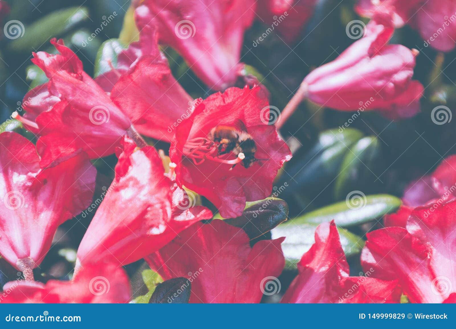 Bello colpo del primo piano dei fiori rossi nel giardino