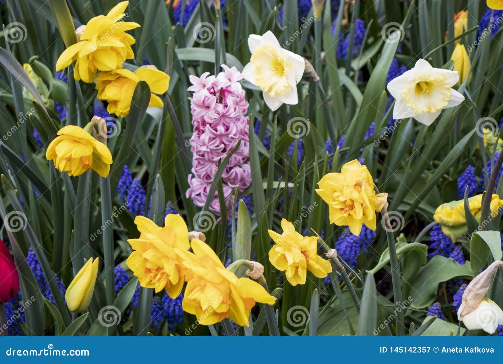 Bello e campo variopinto con i fiori