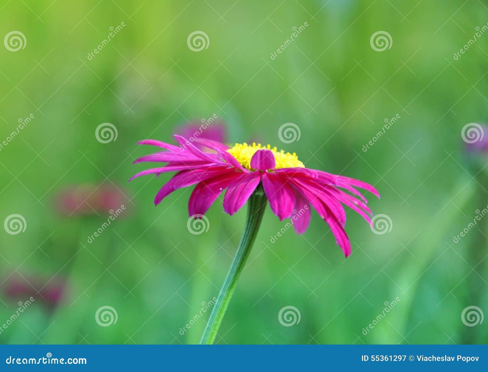 Bello fiore