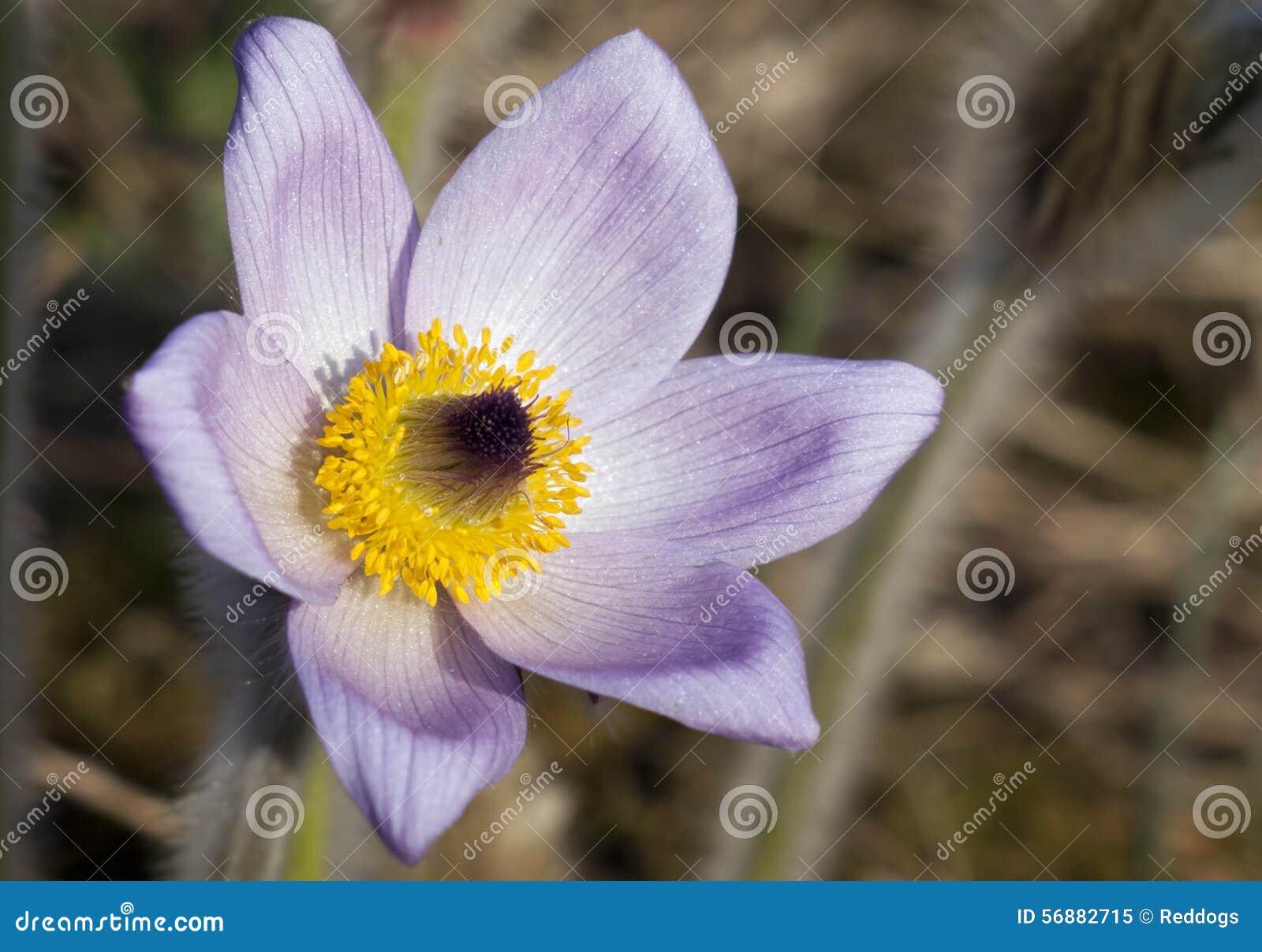 Bello fiore della sorgente