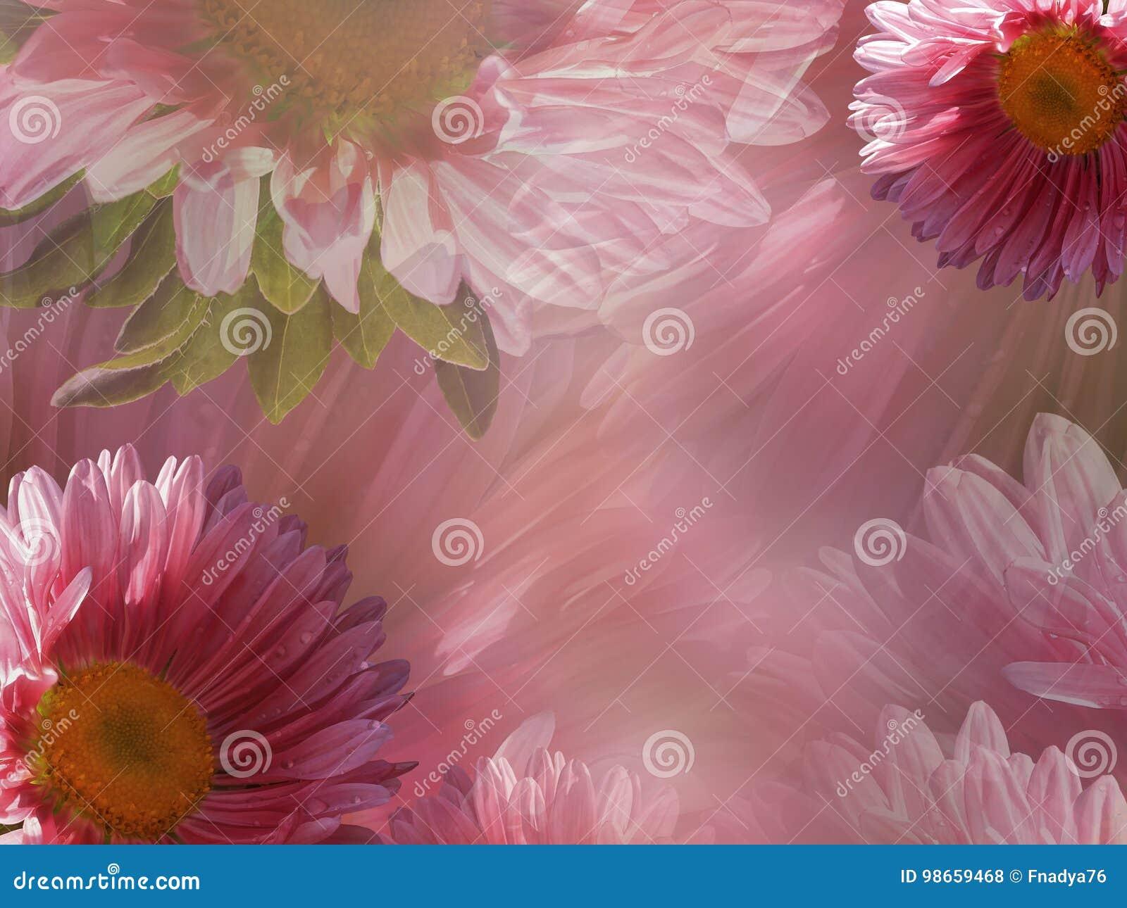Carta Da Parati Rosa Bianca : Bello fondo bianco rosa floreale della margherita carte da parati