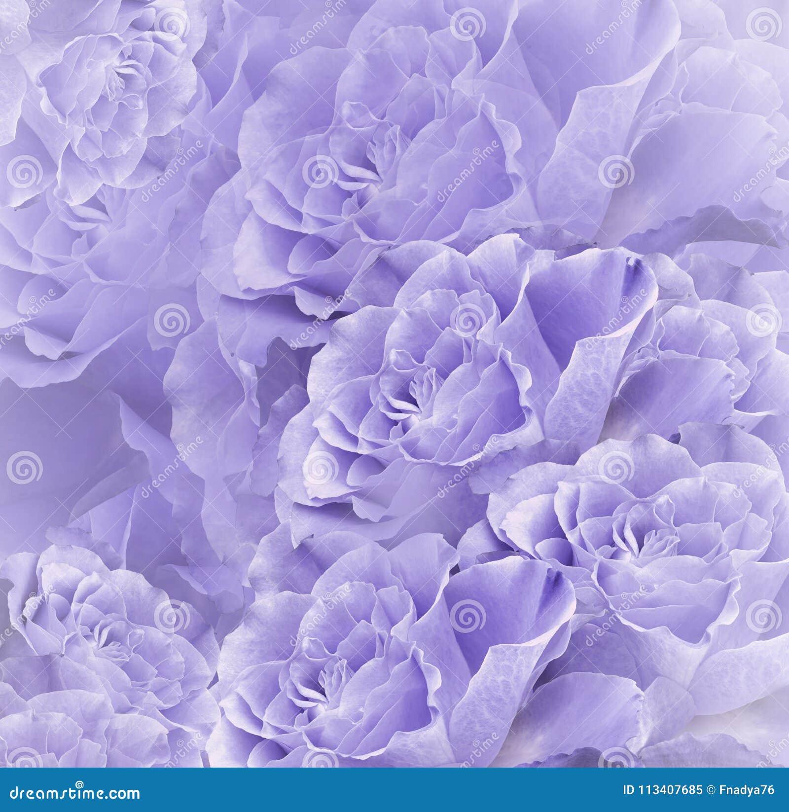 Bello fondo bianco viola floreale Composizione nel fiore Mazzo dei fiori dalle rose rosso-chiaro Primo piano