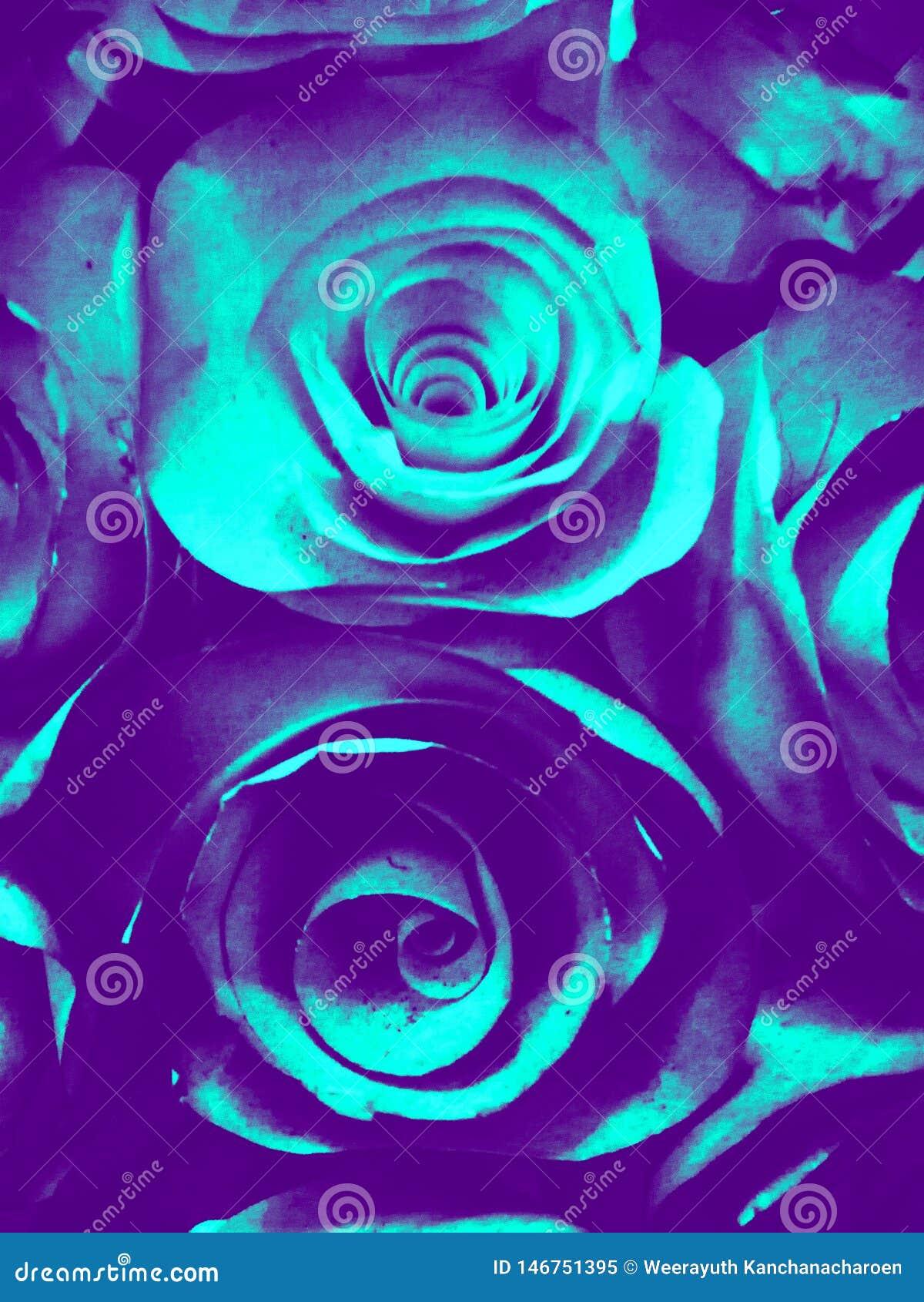 Bello fondo verde blu e struttura rosa bianchi e neri dell illustrazione del fiore nel giardino