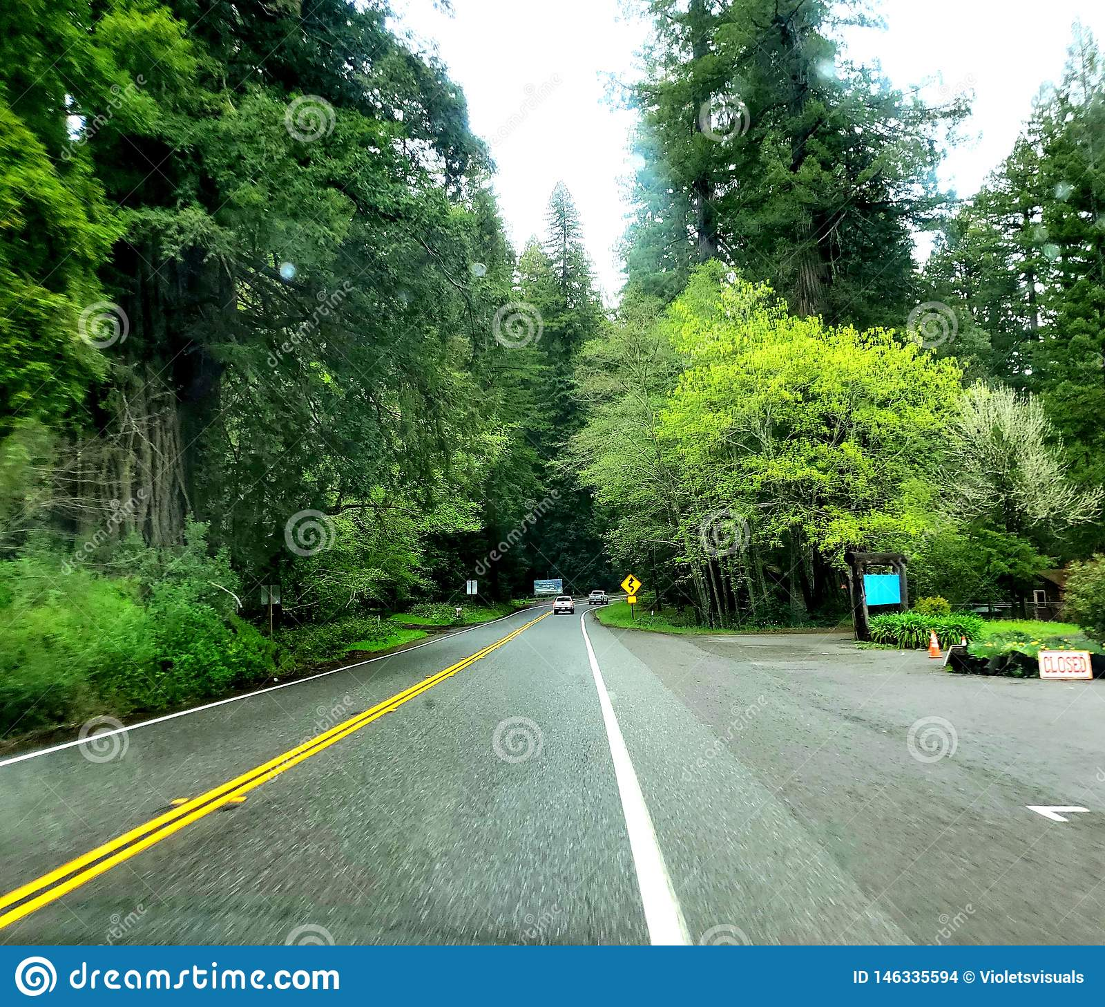 Bello Forest Scenery!