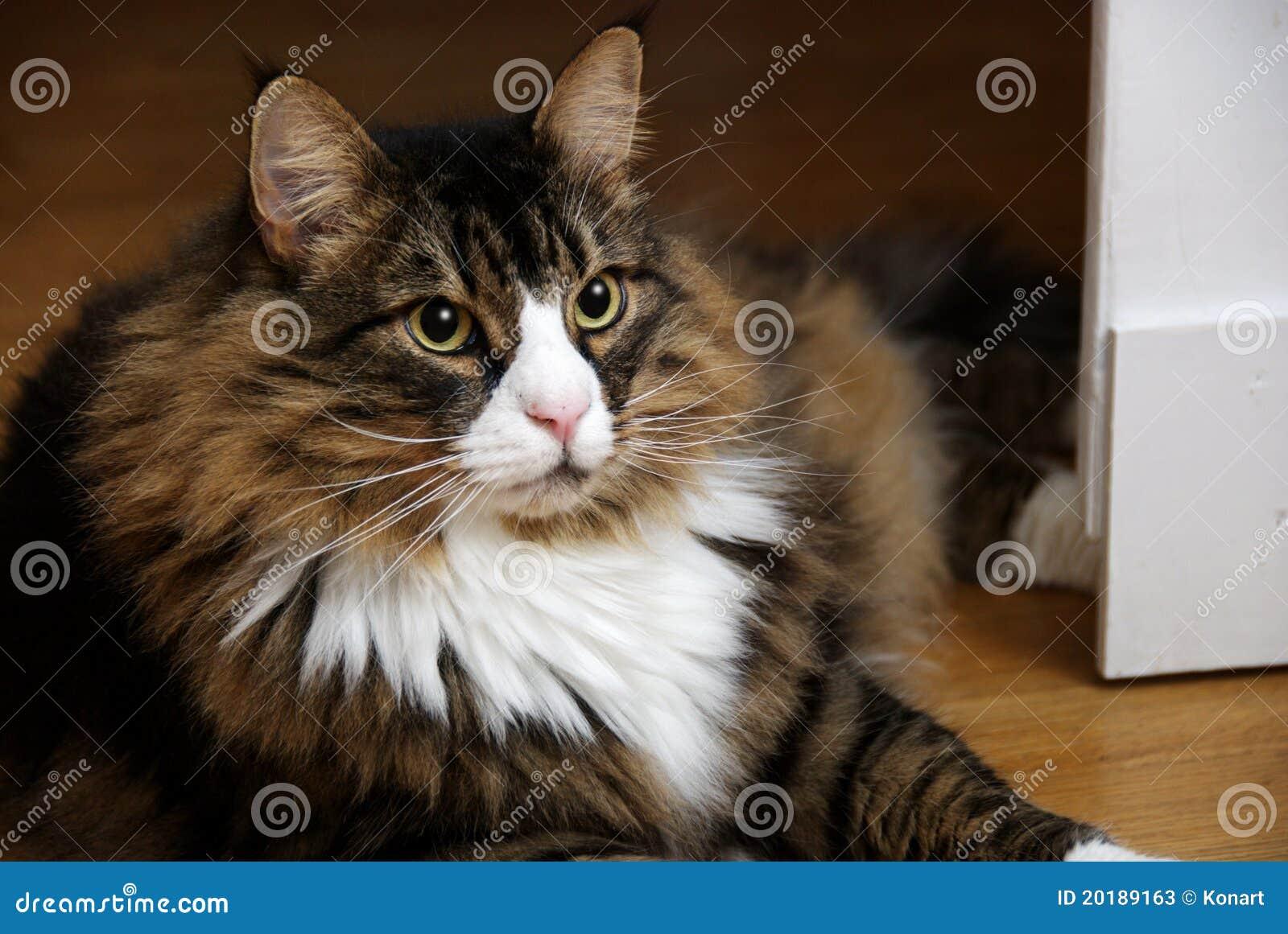 Do Big Cats Loaf