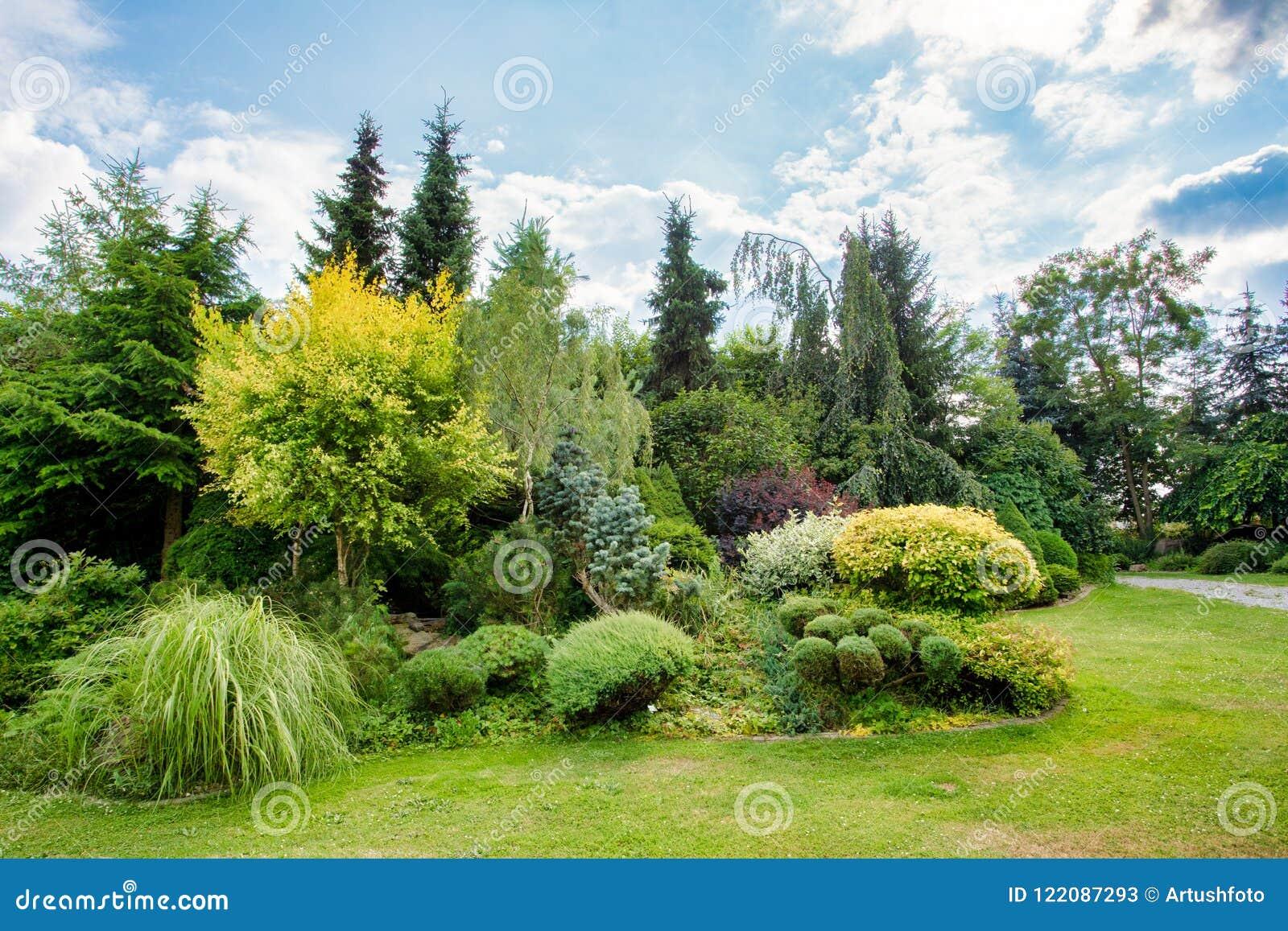 Bello giardino colorato di estate immagine stock immagine di fiori