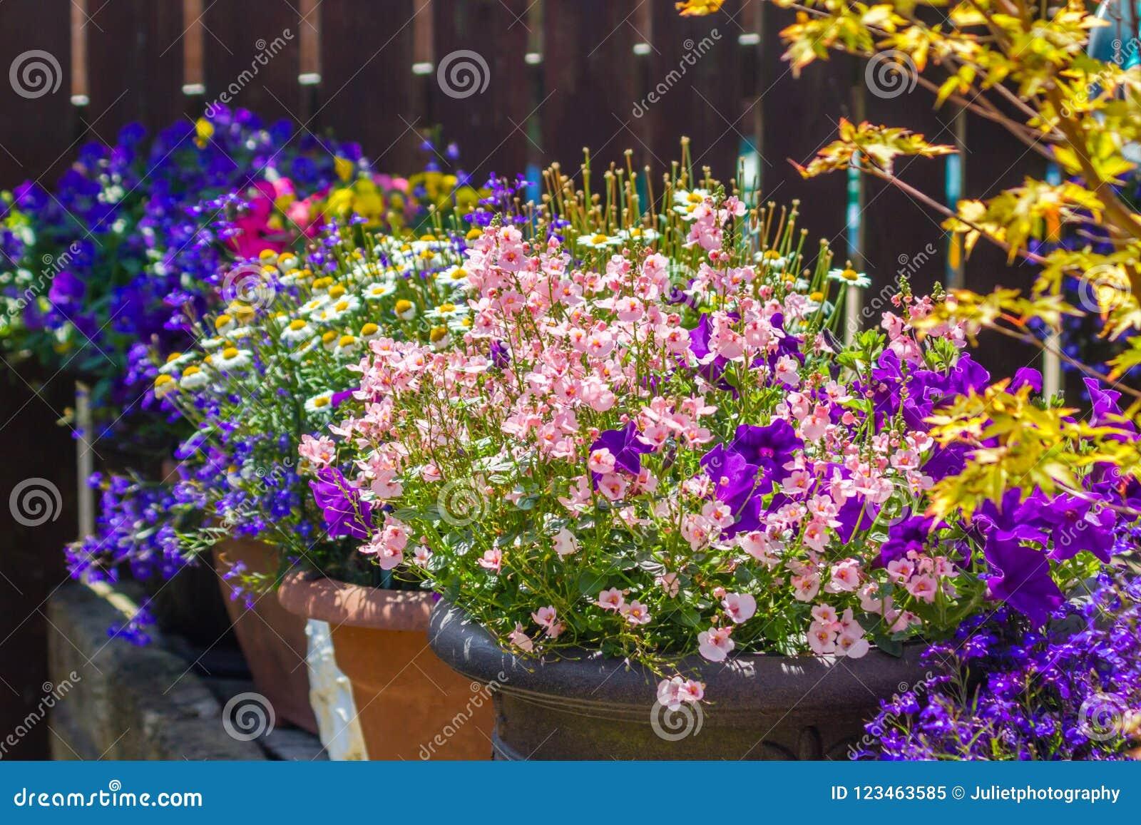 Bello Giardino Di Estate Con Il Fiore Stupefacente In Grandi Vasi