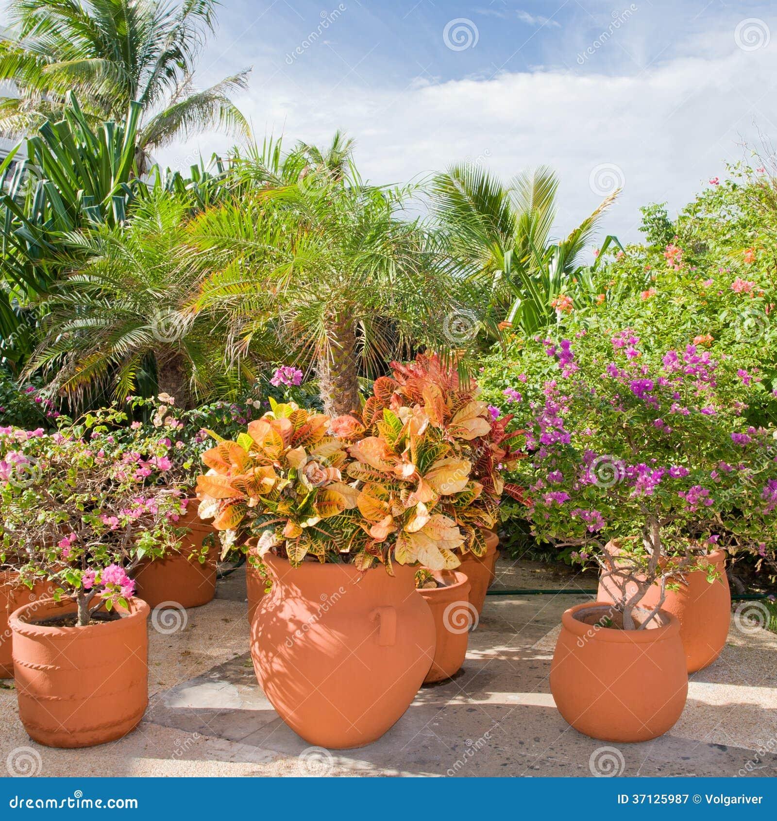 Bello giardino tropicale con i fiori e le piante immagine - Giardino tropicale ...