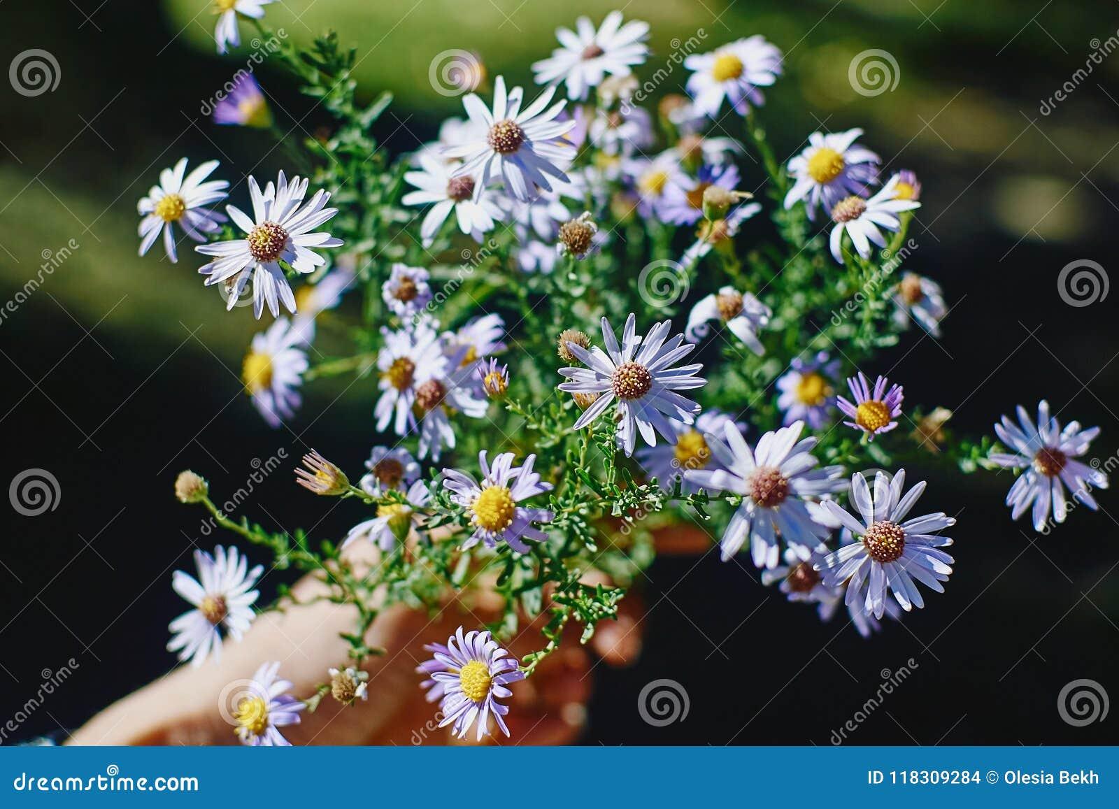 Bello mazzo dei fiori selvaggi in una mano femminile sulla parte posteriore di verde