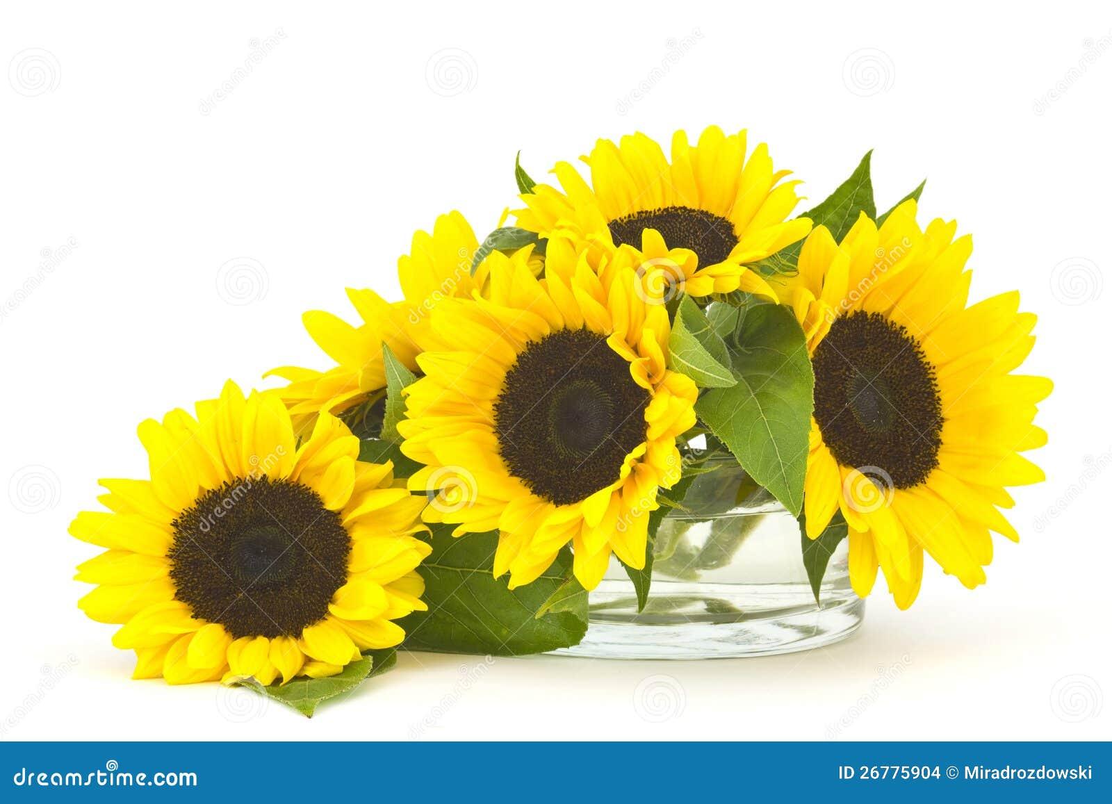 Bello mazzo del girasole in vaso di vetro fotografia stock for Disegni e prezzi del mazzo