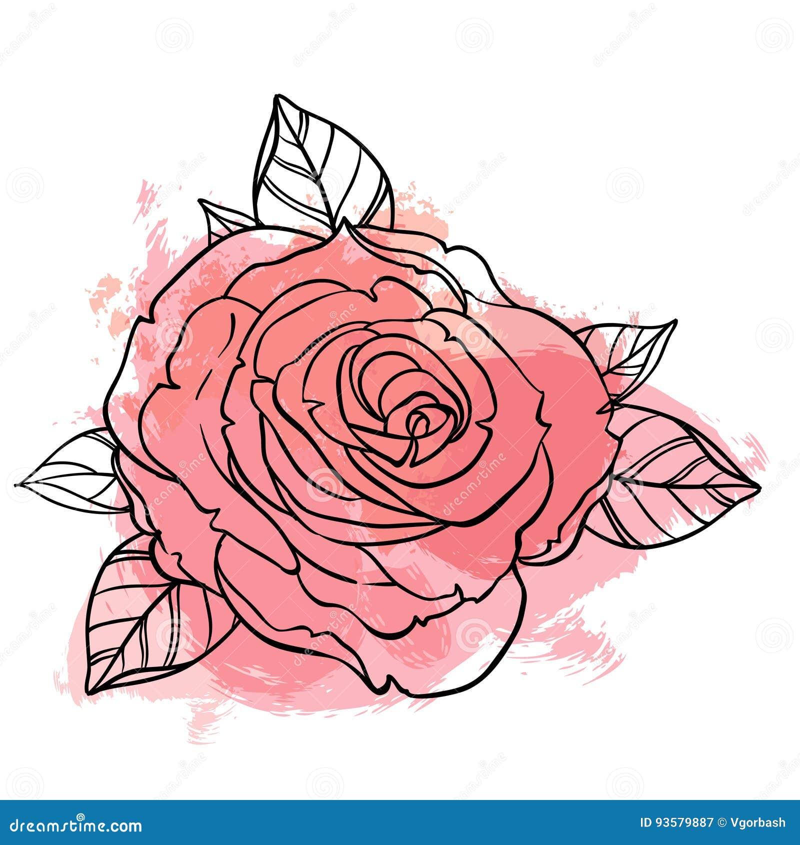 Bello mazzo delle rose che attinge il fondo beige di lerciume Mano