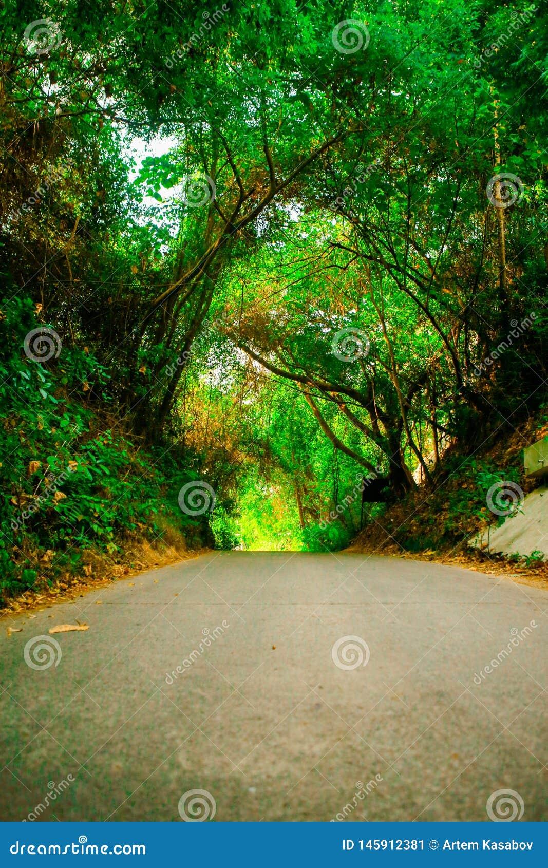 Bello modo del percorso o della strada in vicolo con gli alberi verdi ed in erba in all aperto soleggiato di estate senza automob