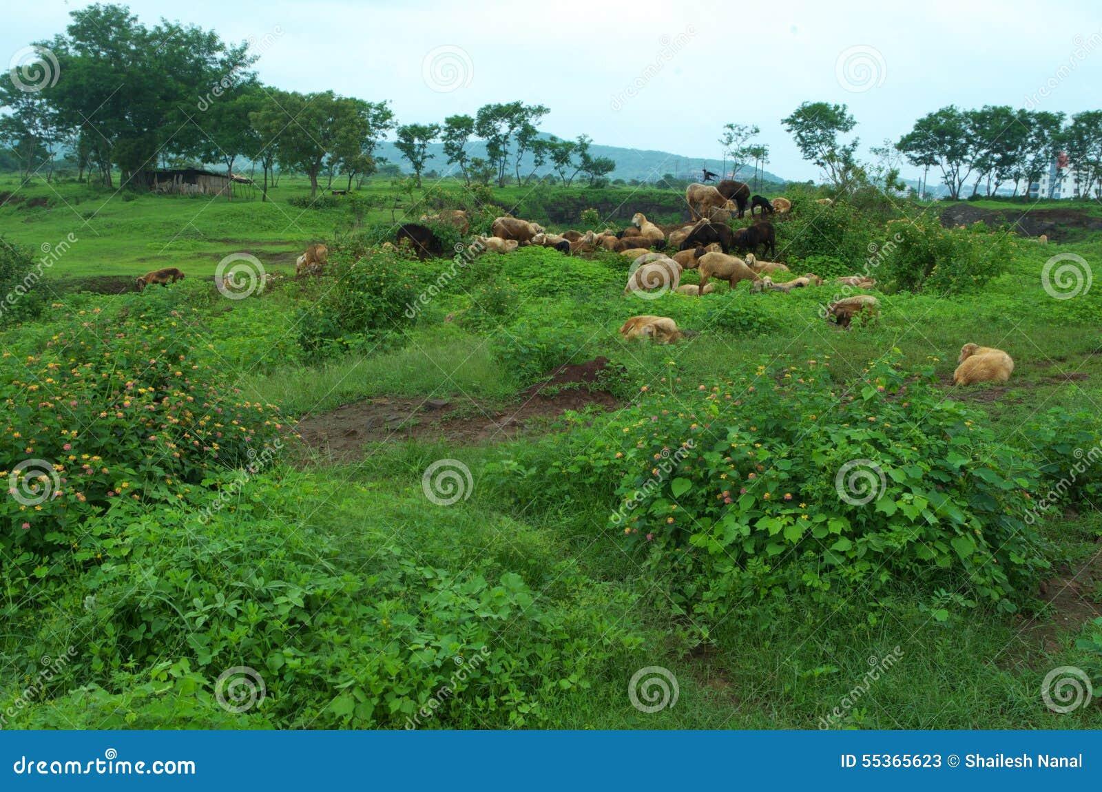 Bello paesaggio del terreno coltivabile in Warje
