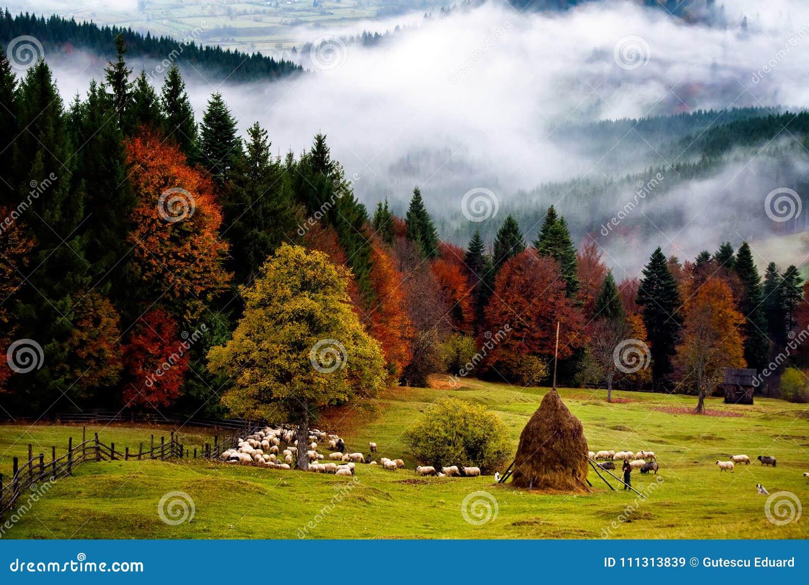 Bello paesaggio della Romania, autunno in Bucovina con il pastore