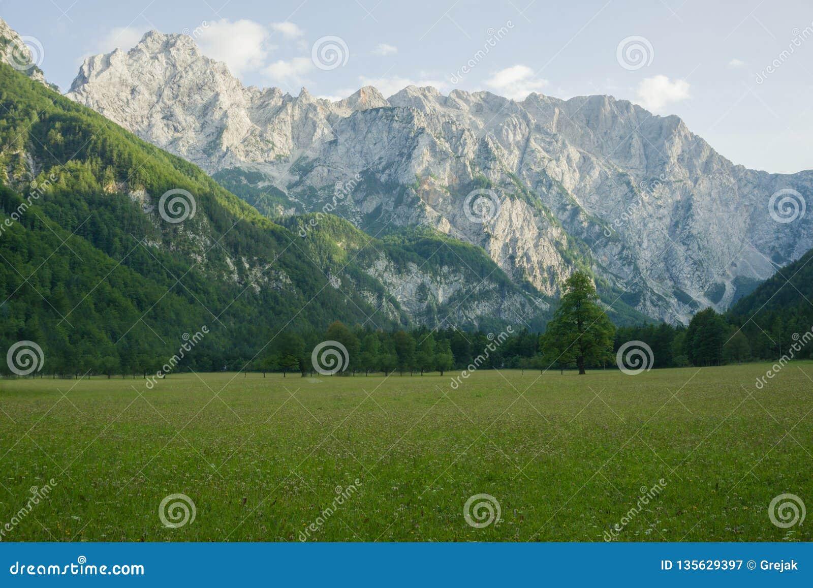 Bello paesaggio delle alpi di Julian in Slovenia Foresta attillata su un prato erboso