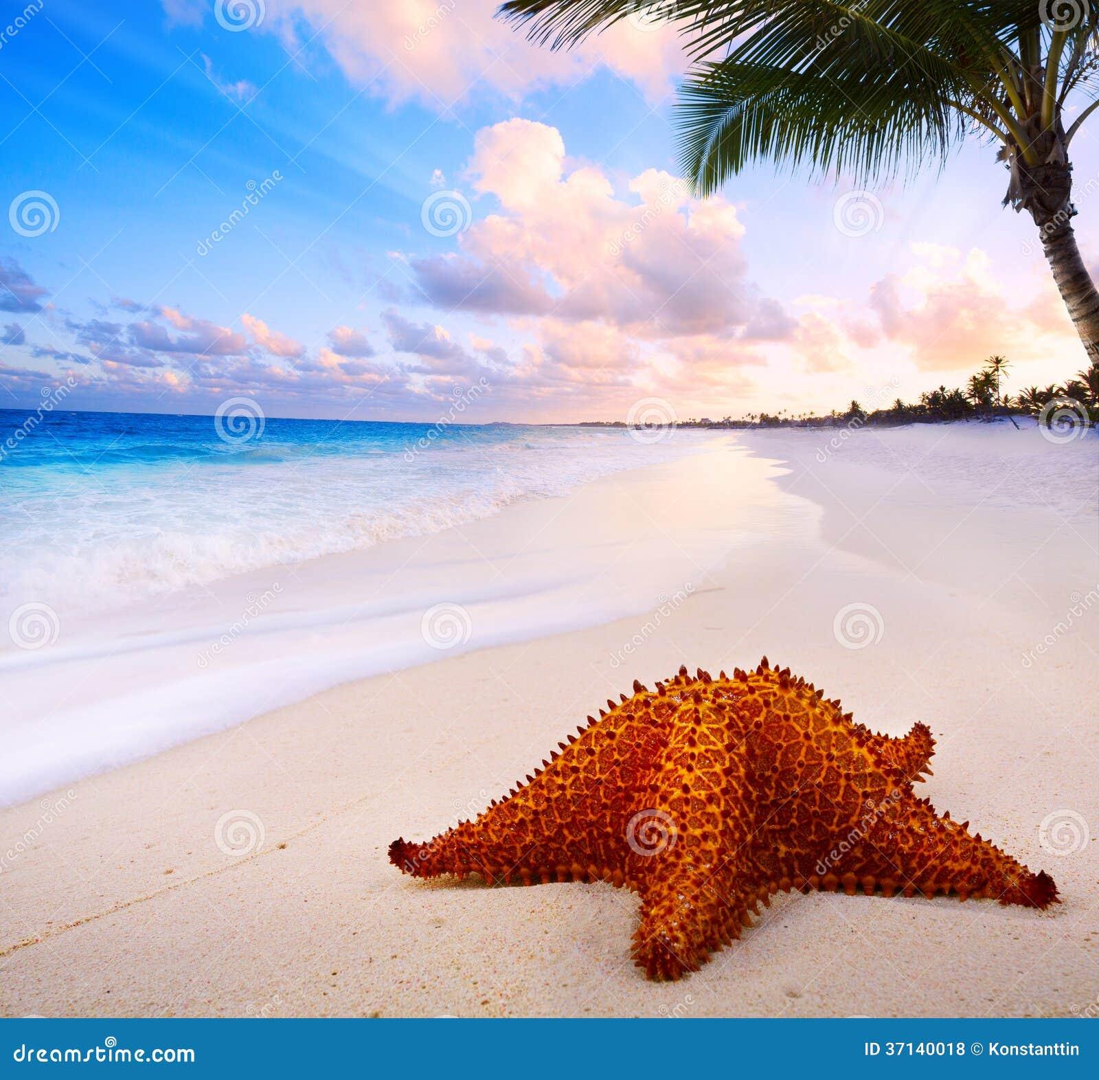 Bello paesaggio di arte con la stella di mare sulla for Disegni di paesaggi di mare