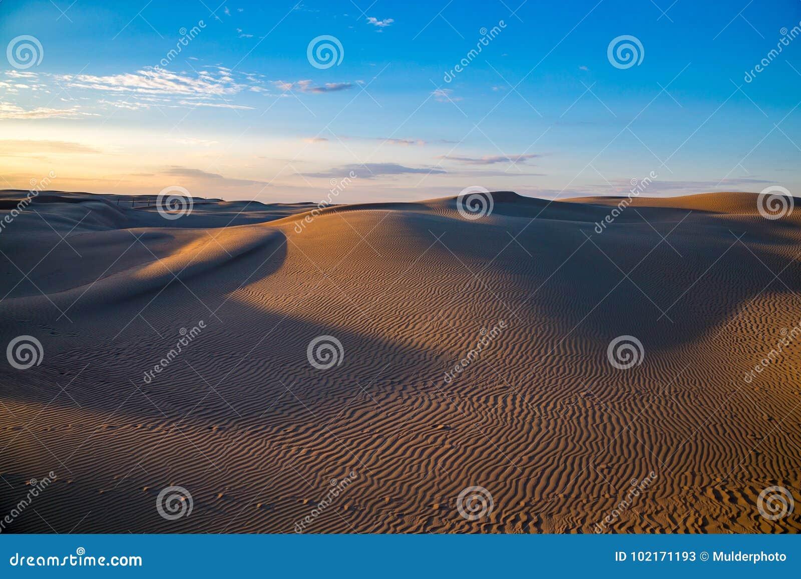 Bello paesaggio naturale del deserto, dune di sabbia sul fondo blu del cielo di sera
