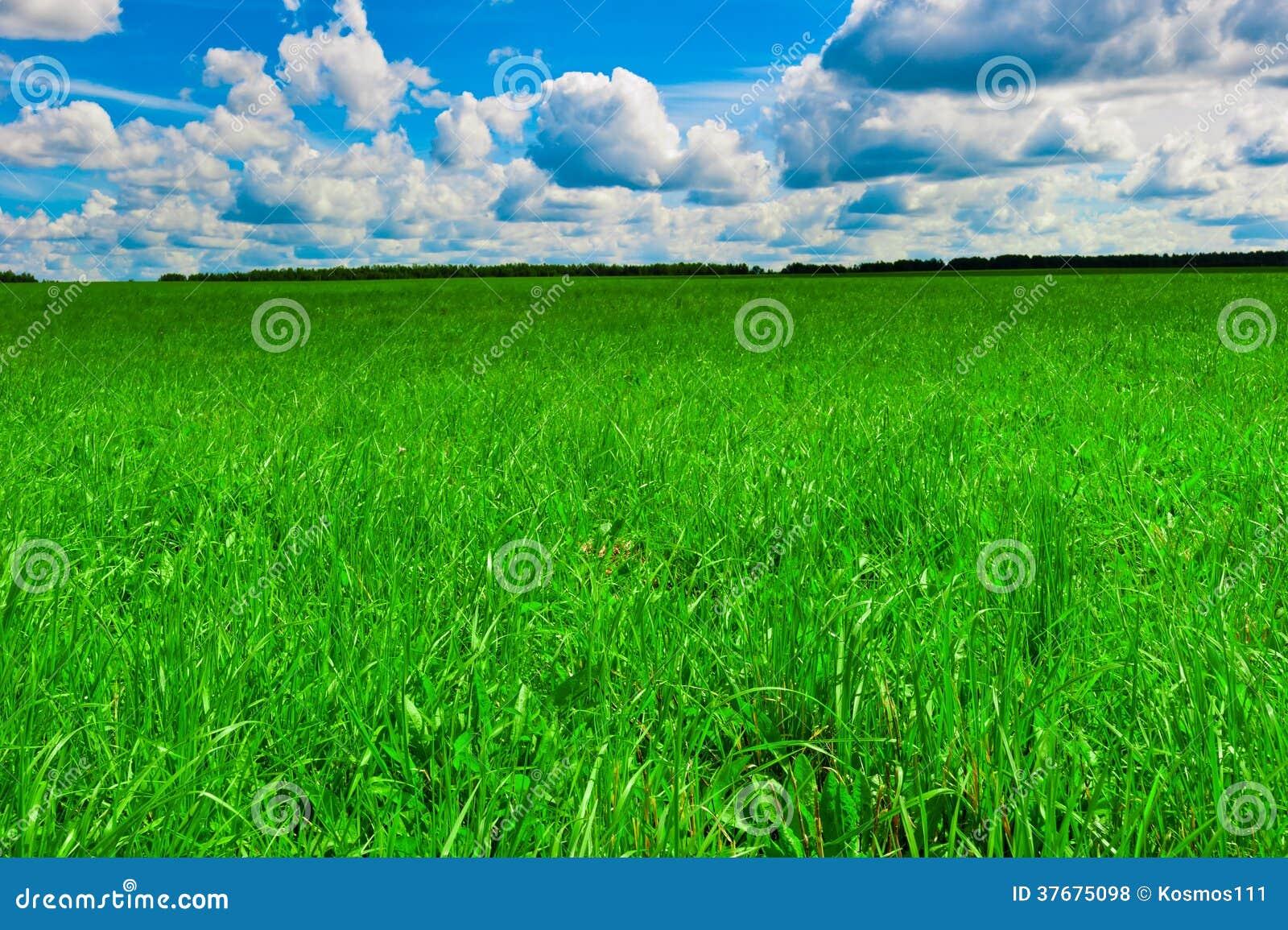 Bello prato inglese verde e tempo soleggiato piacevole - Soleggiato in inglese ...