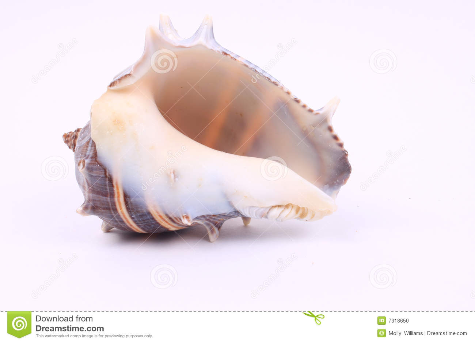 Bello Seashell