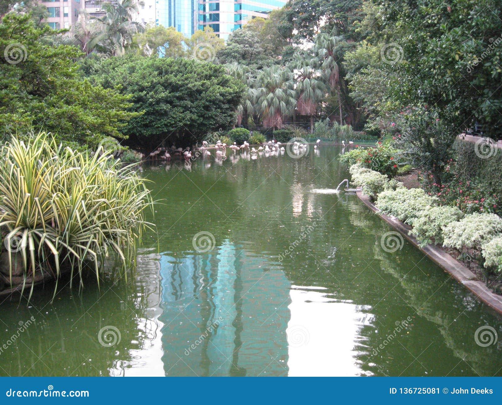 Bello stagno di pesce nel parco di Kowloon, Hong Kong