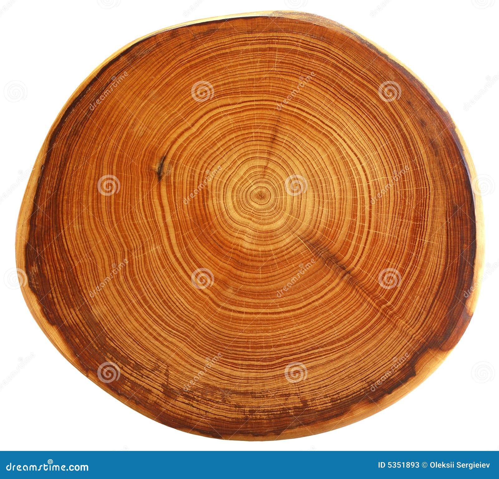 Bello taglio dell albero