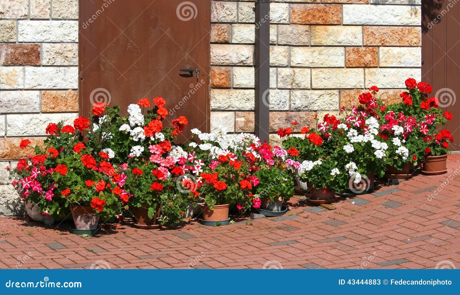 Bello terrazzo fiorito con i vasi dei gerani di fioritura