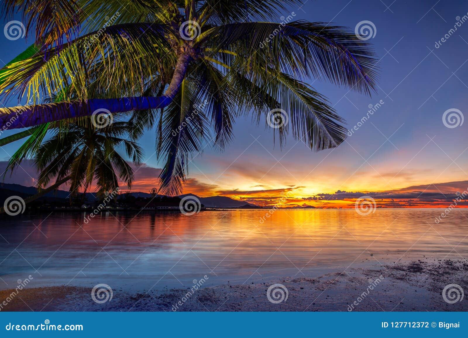 Bello tramonto con l albero del cocco sulla spiaggia in samui Tailandia del KOH