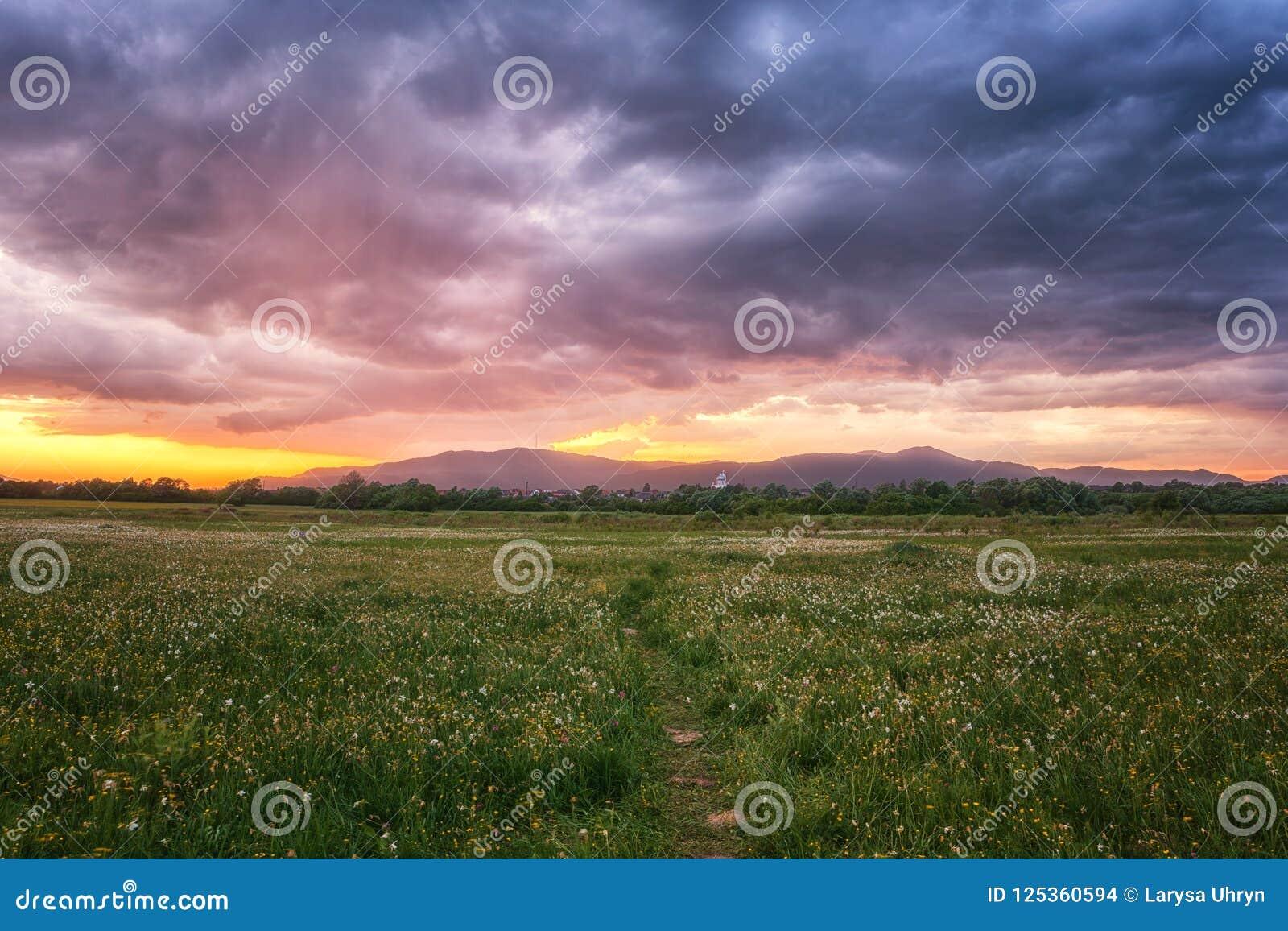 Bello tramonto nella valle di fioritura, nel paesaggio scenico con i fiori crescenti selvaggi e nel cielo nuvoloso di colore