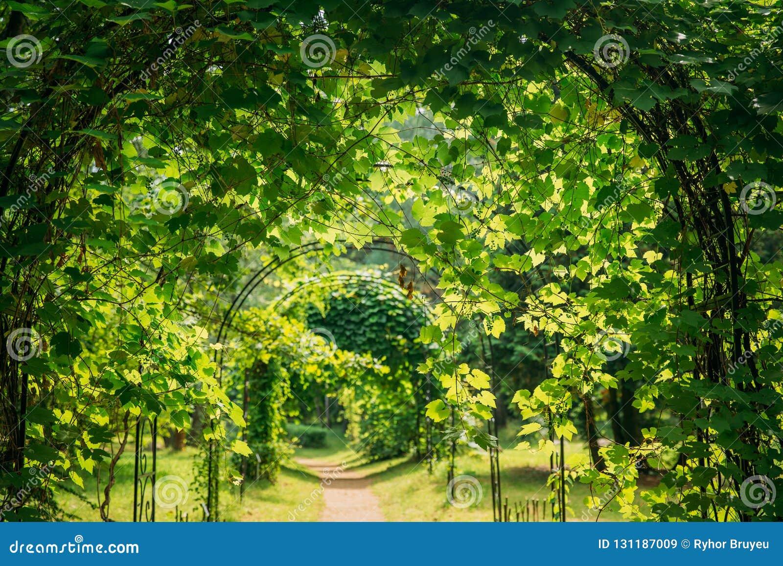 Bello vicolo in parco Percorso del vicolo del passaggio pedonale attraverso la pergola con