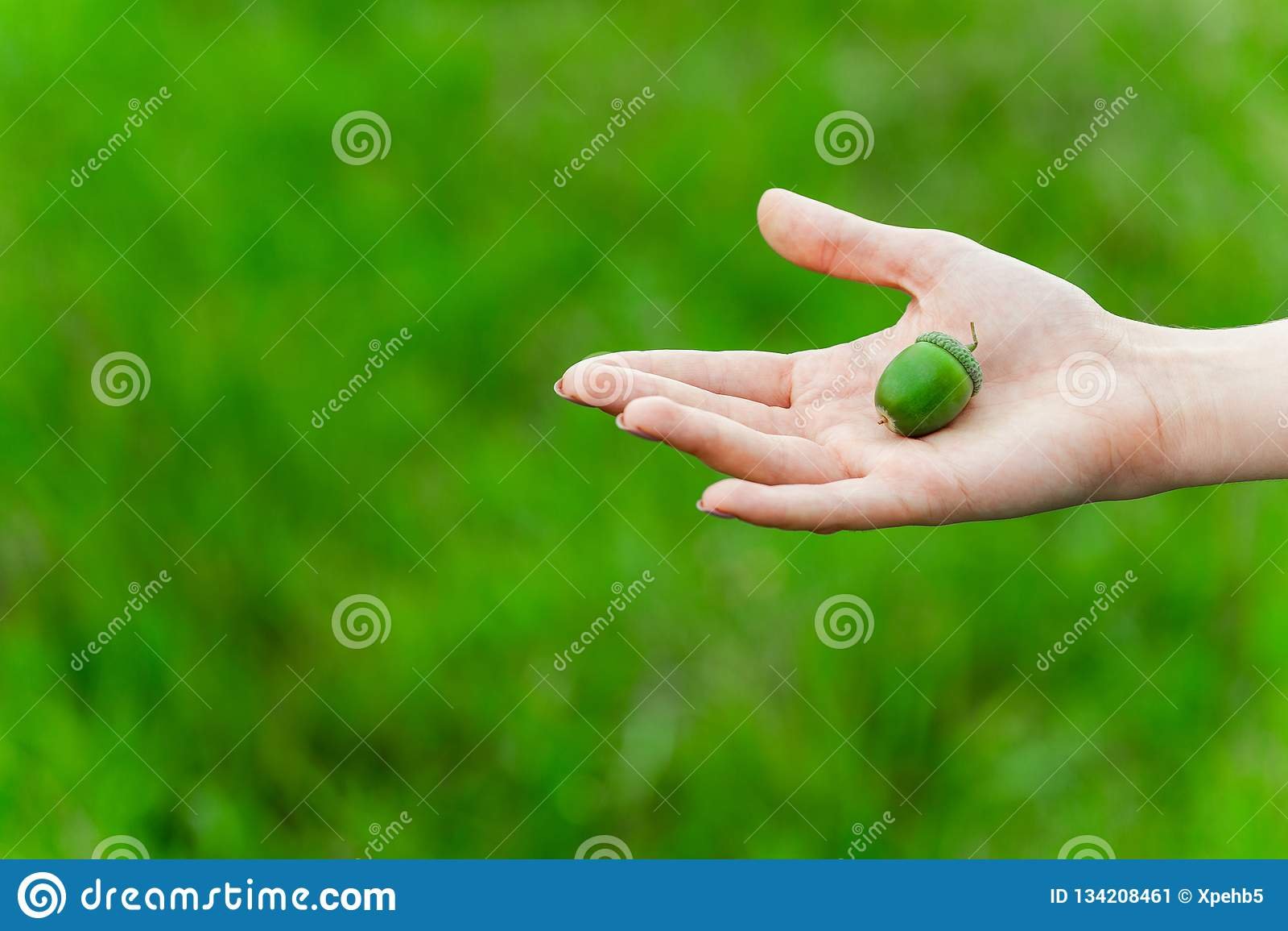 Bellota verde en la mano de la mujer