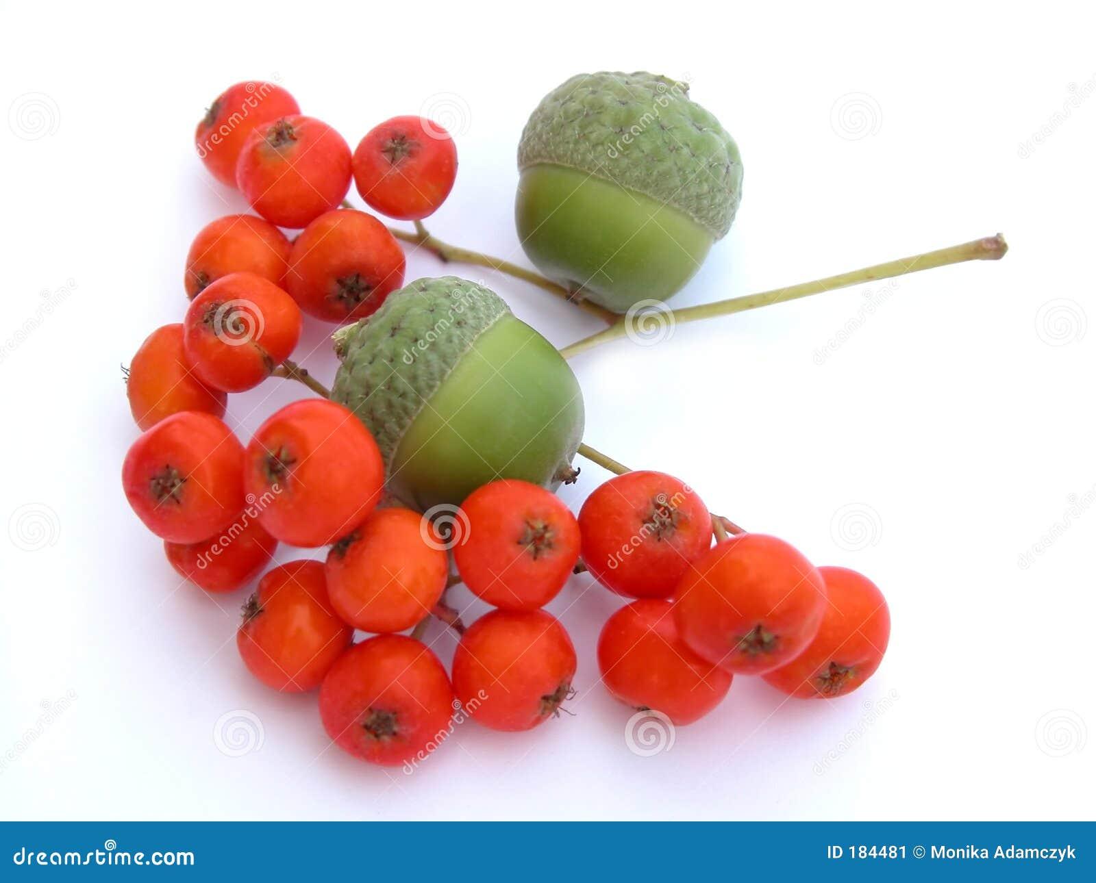 Bellotas y ashberry