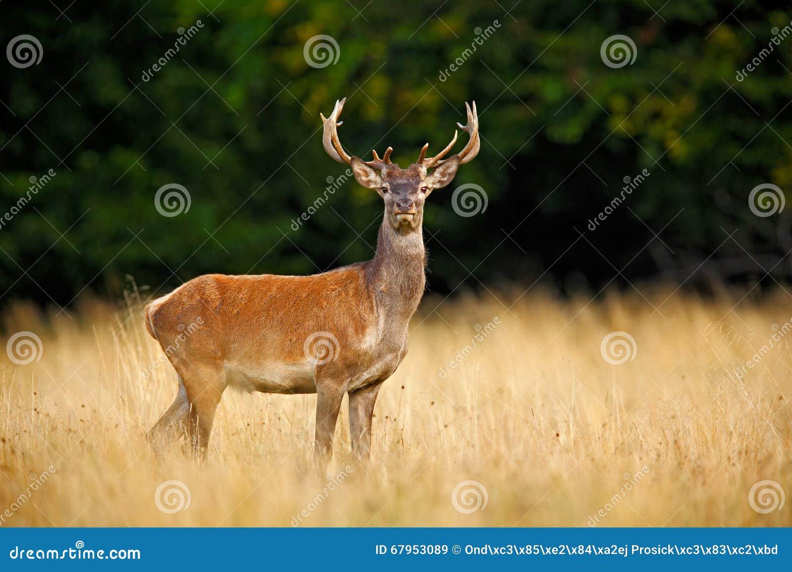 adult parties in red deer