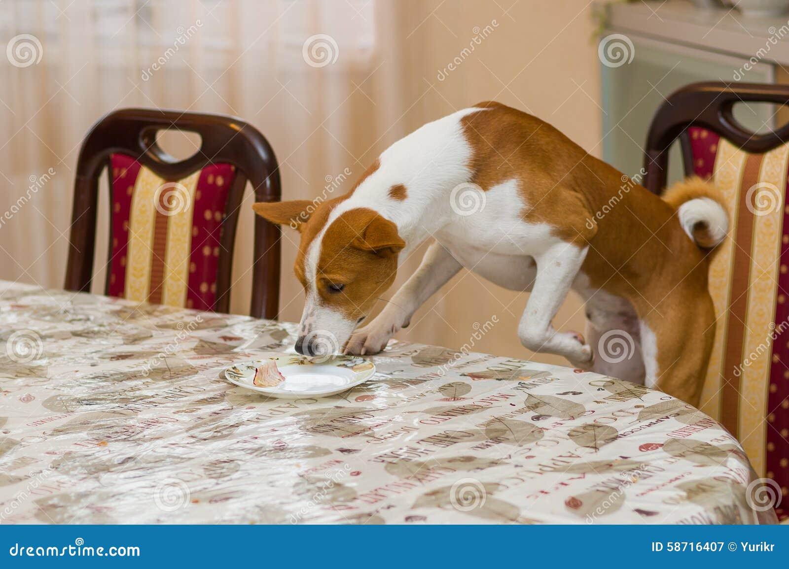 Belopp för Basenji hundstyrning av rester på en matställetabell