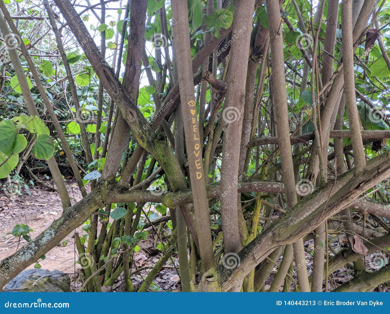 & x27;Beloved & x27; written on tree in woods