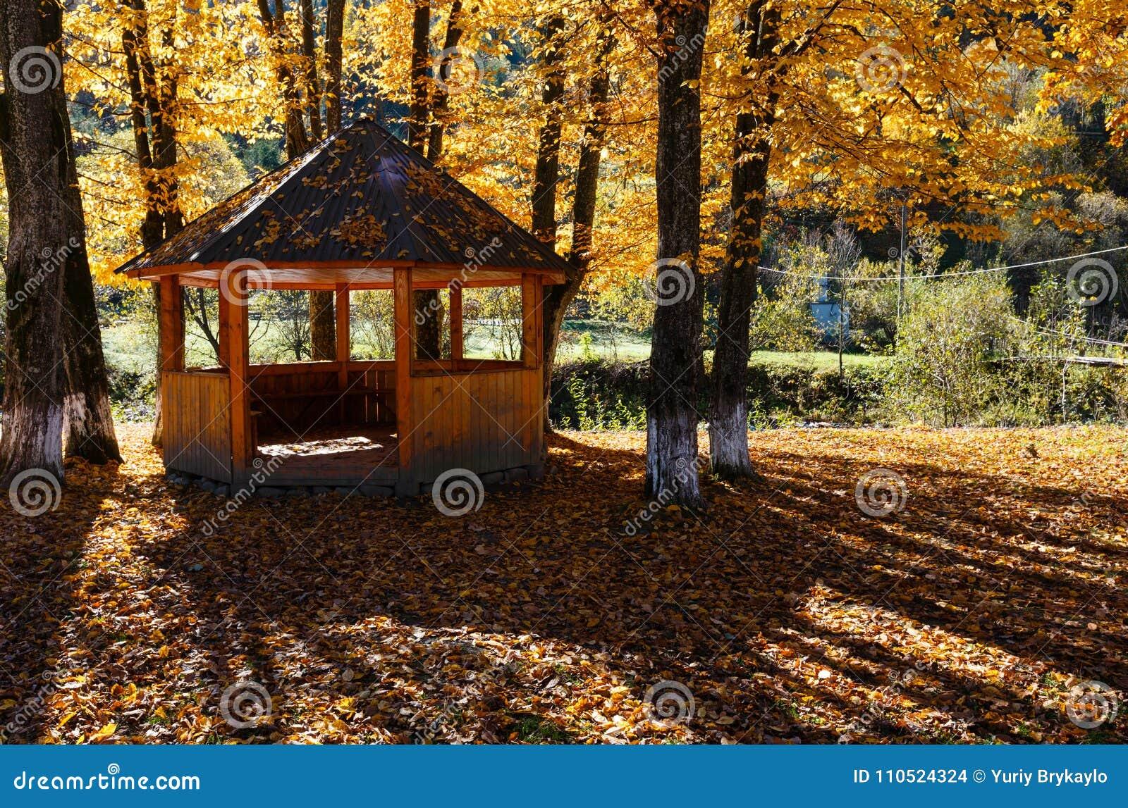 Belvédère en parc ensoleillé de hêtre de montagne carpathienne d automne sur la rivière