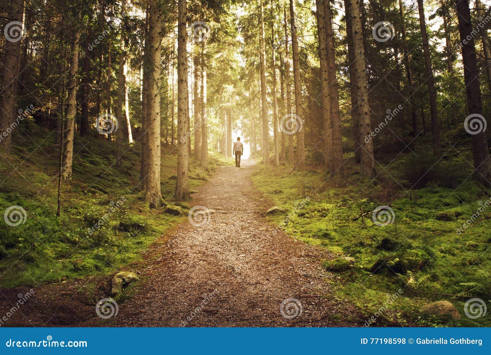 Bemannen Sie das Gehen herauf Weg in Richtung zum Licht im magischen Wald