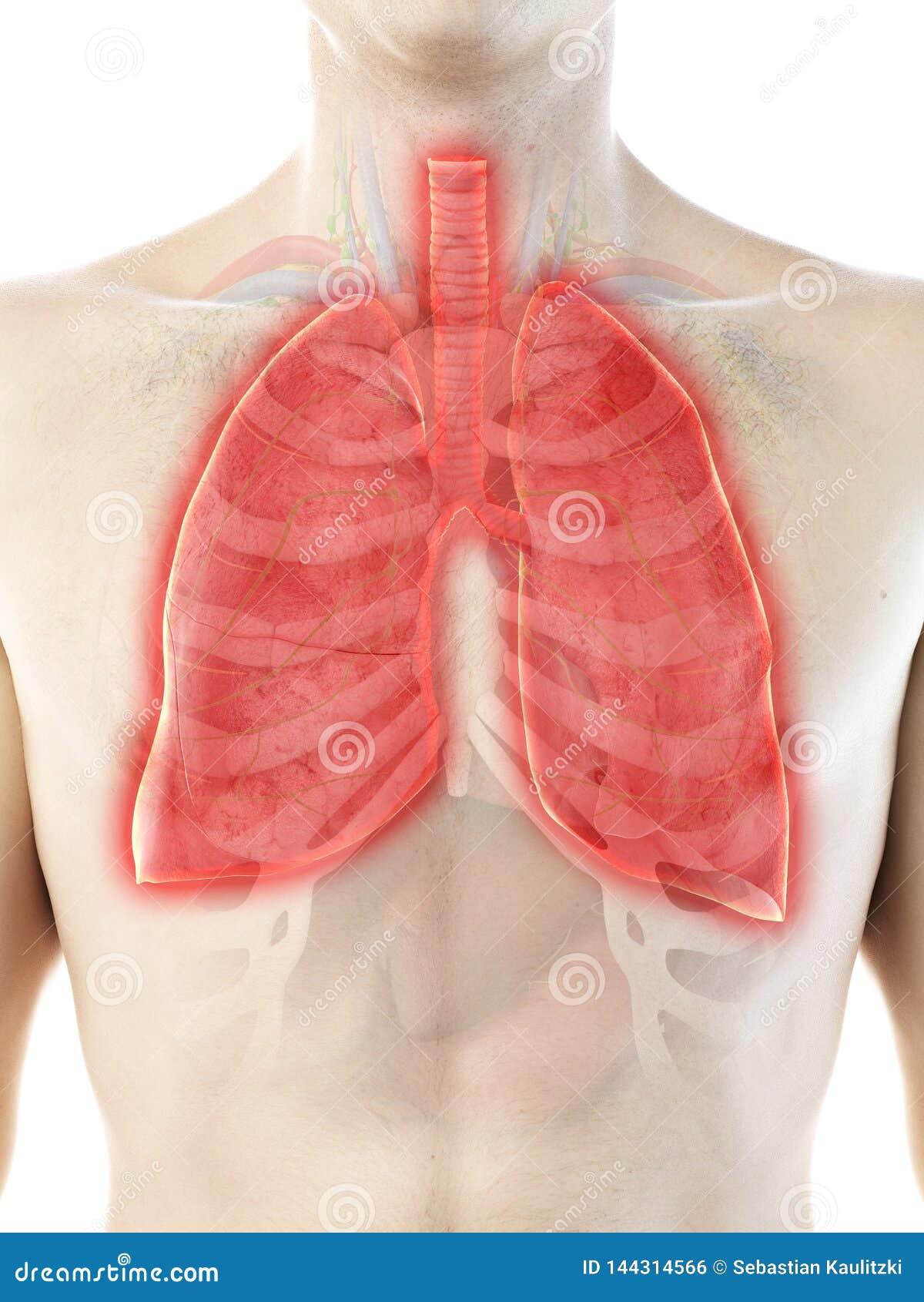 A bemant longen