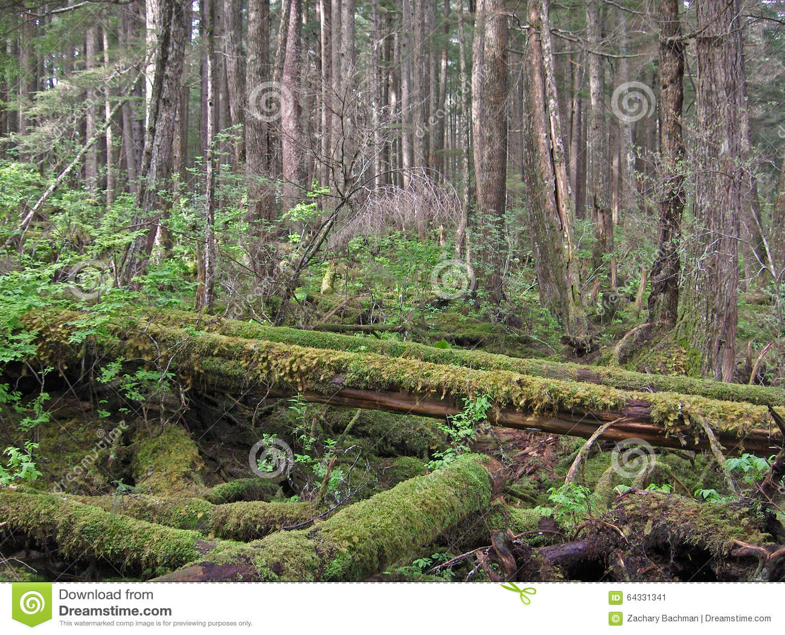 Bemost Gevallen Bomenhout