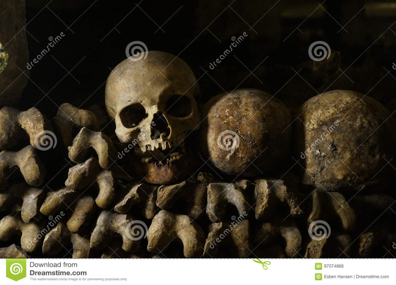 Ben, skelett och skallar