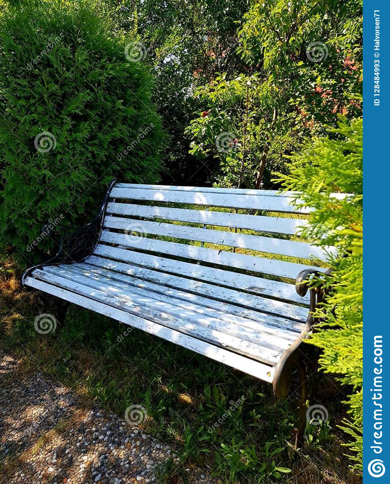 Enjoyable Bench In The Garden In Front Of Some Shrubs Stock Image Cjindustries Chair Design For Home Cjindustriesco