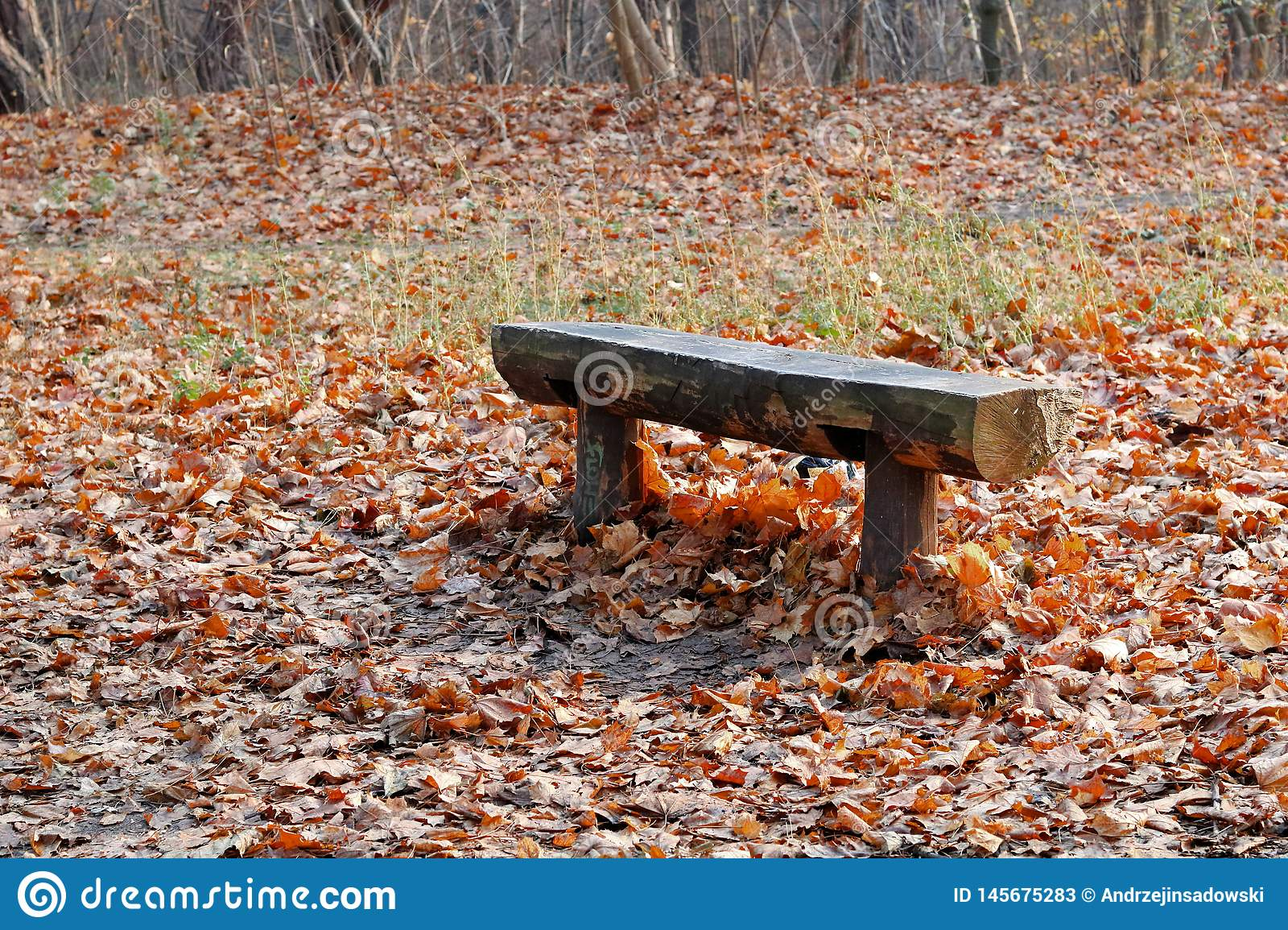A bench that has been standing in the forest for many years