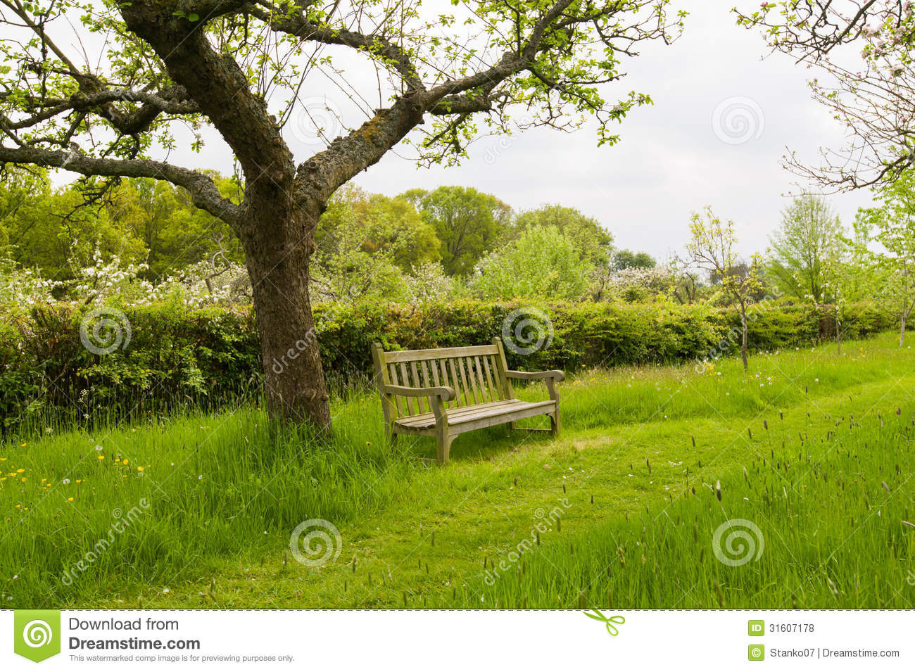 Bench In Orchard Garden Royalty Free Stock Photos