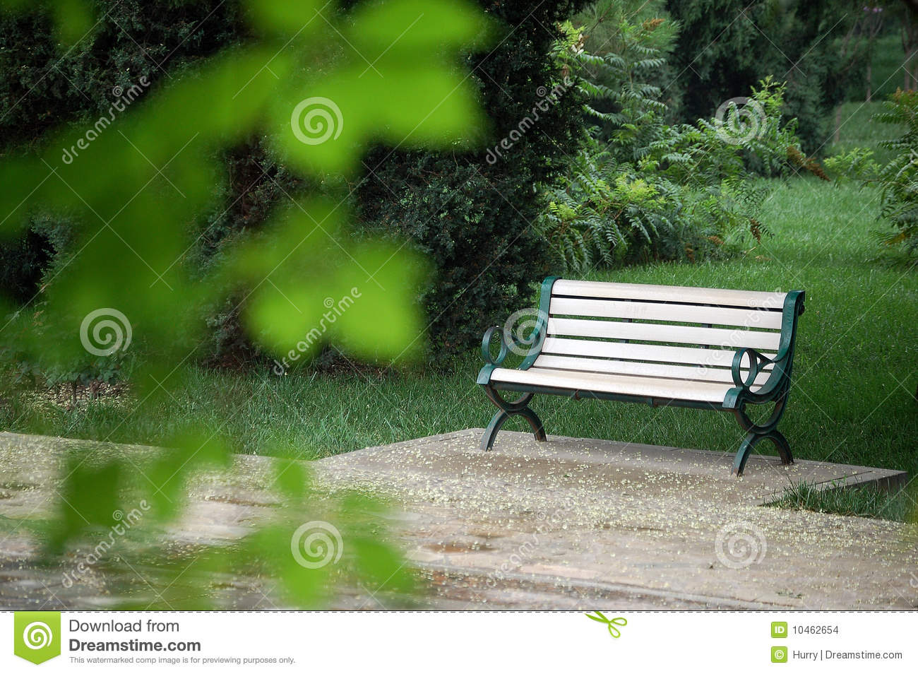 Bench In A Park Stock Photo Image Of Park Leaf Green 10462654
