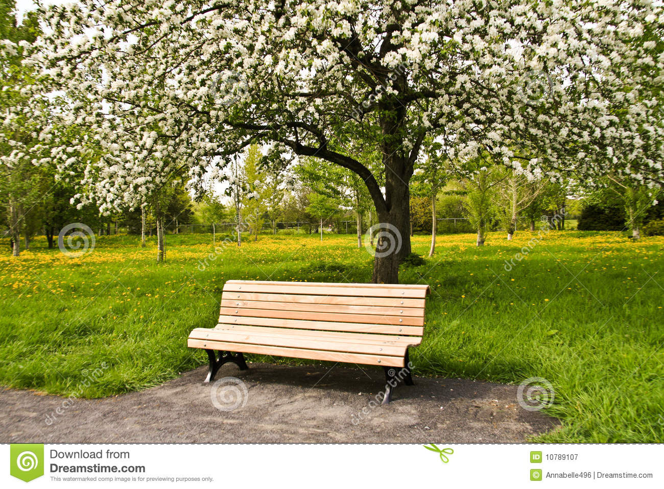 Bench In Park Stock Image Image Of Serene Urban Benches 10789107