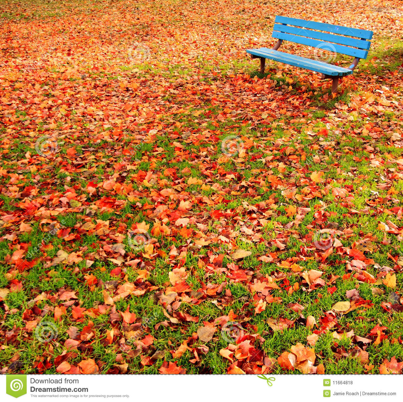 autumn leaves on bench - photo #19