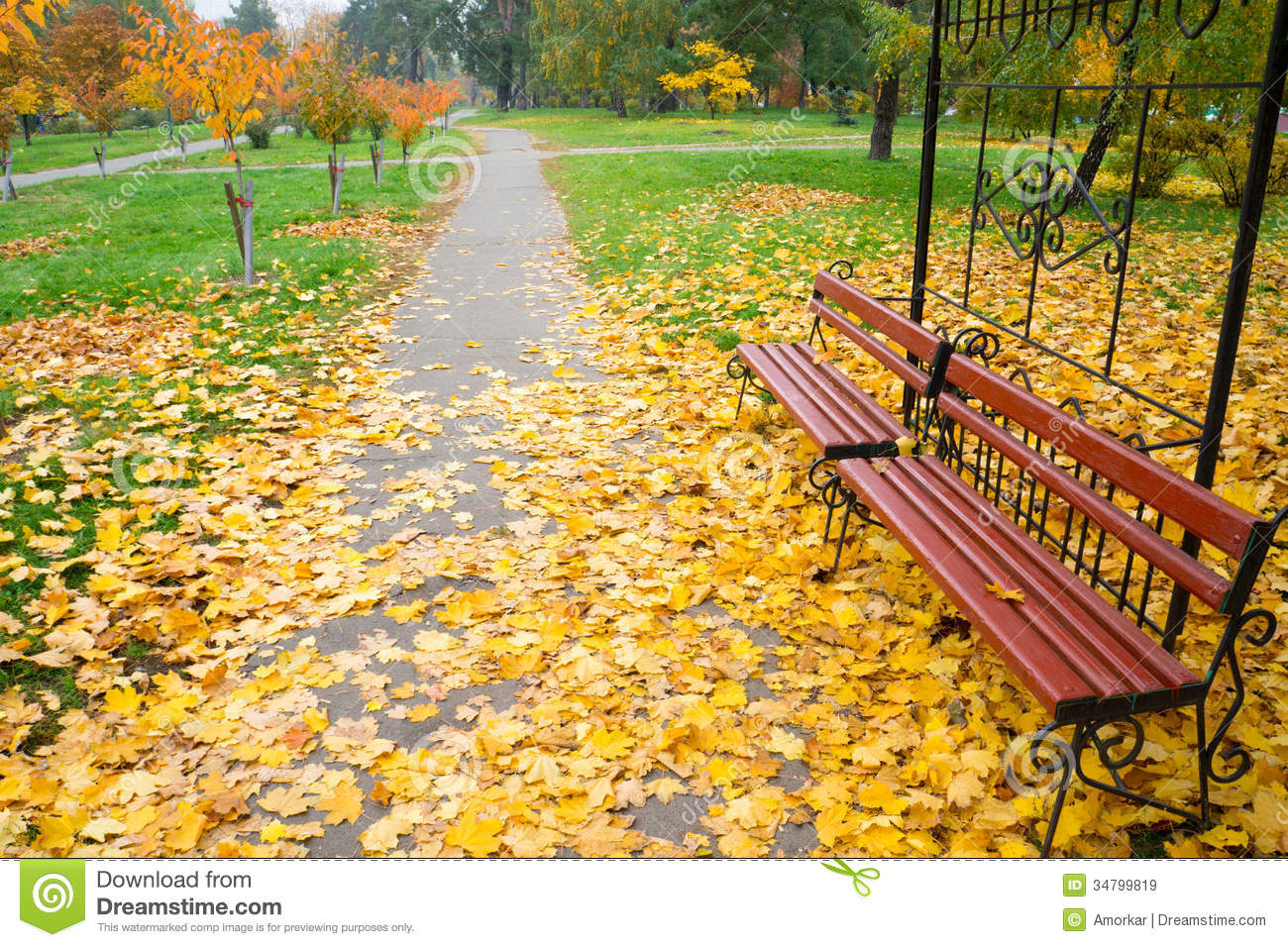 Bench In The Park Stock Image. Image Of Beauty, Grass
