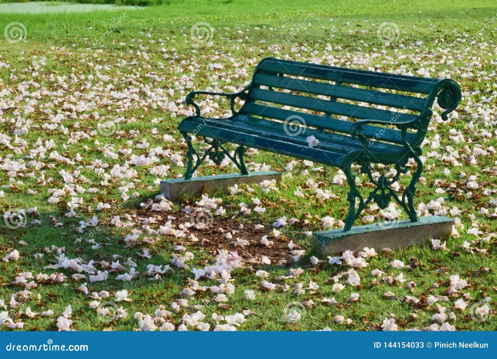 Bench per rilassarsi nel parco